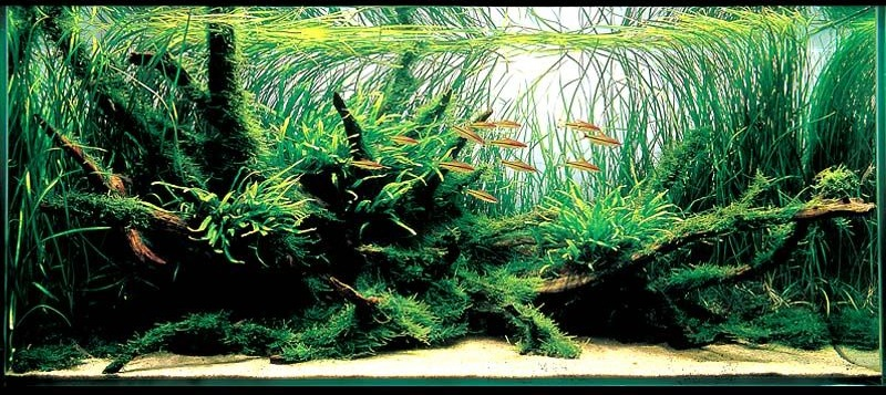 Natural Style Aquarium