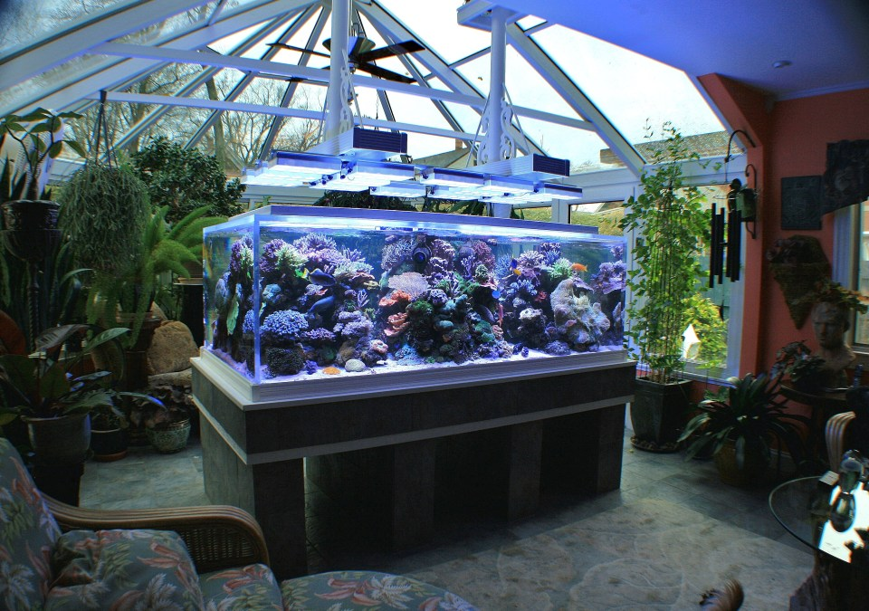 360 Degree Saltwater Aquarium
