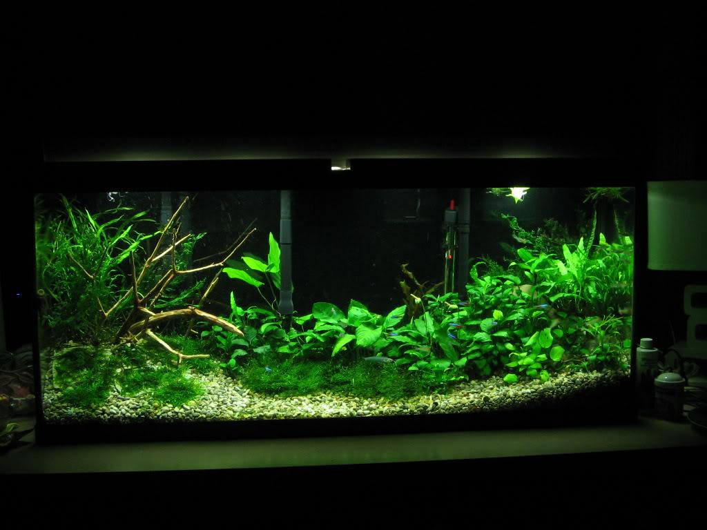 High tech vs low tech how many gizmos should your for Plante aquarium