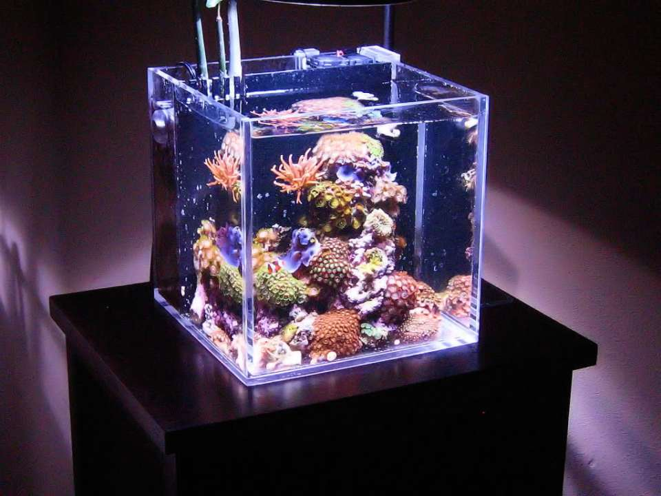 Nano Reef Aquarium