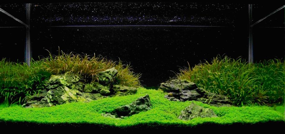 Japanese-Inspired Minimal Aquarium