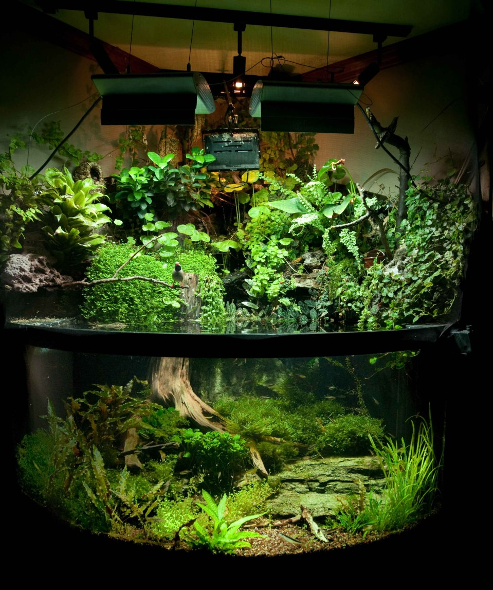Paludarium with Birds