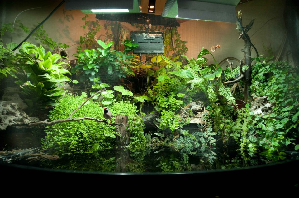 Paludarium with a Bird Perched on a Branch