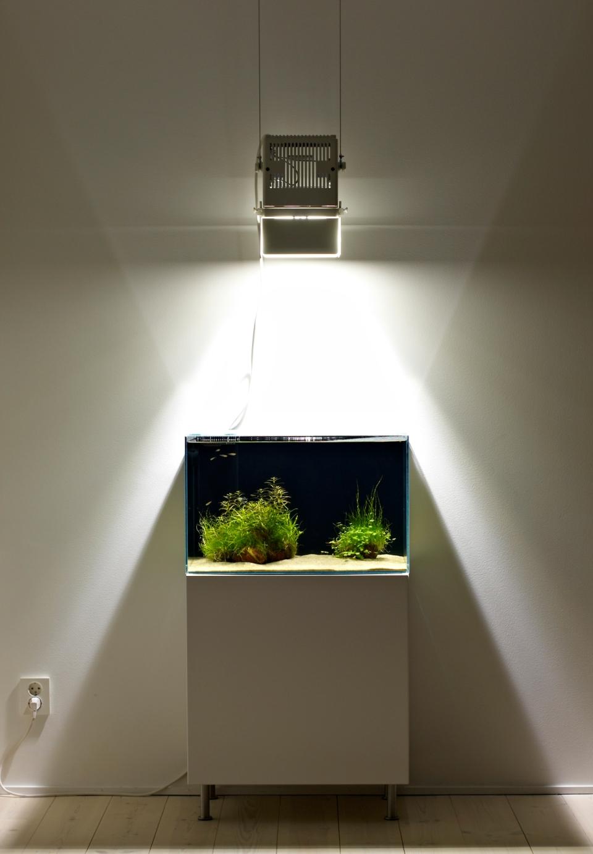Aquarium Minimalism