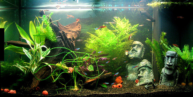 Easter Island Aquascape