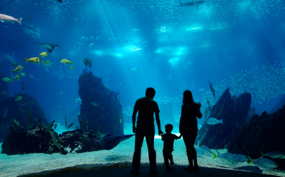 Family at a Public Aquarium