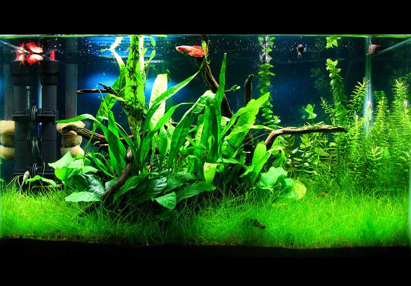 Grouped Plants in a Plated Aquarium