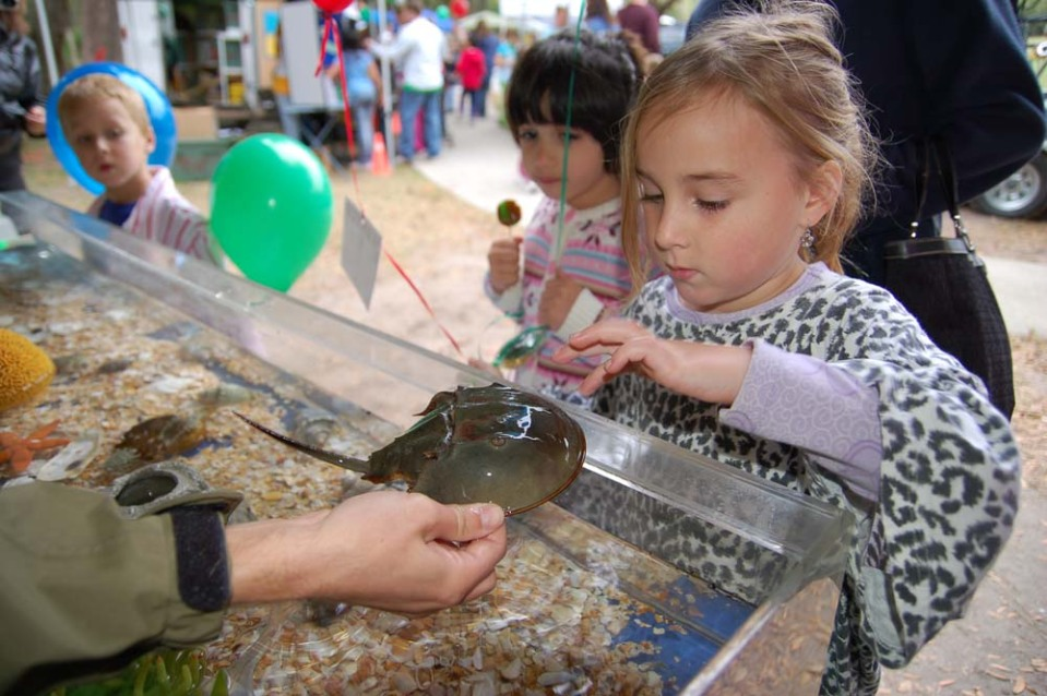 A Young Child Touching a Horseshoe Crab