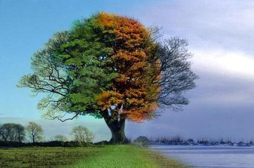 Timelapse Tree