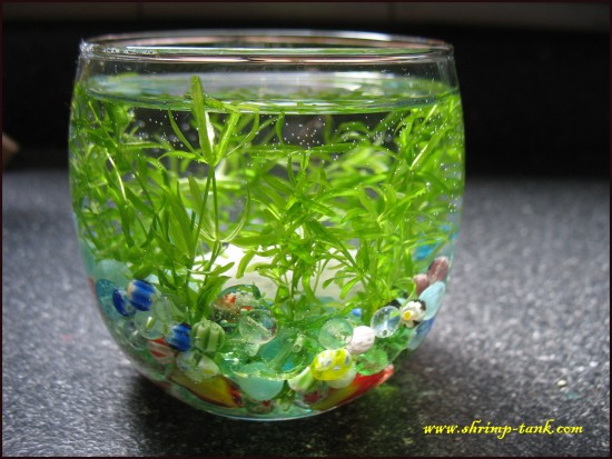 Planted Glass Aquarium for Children