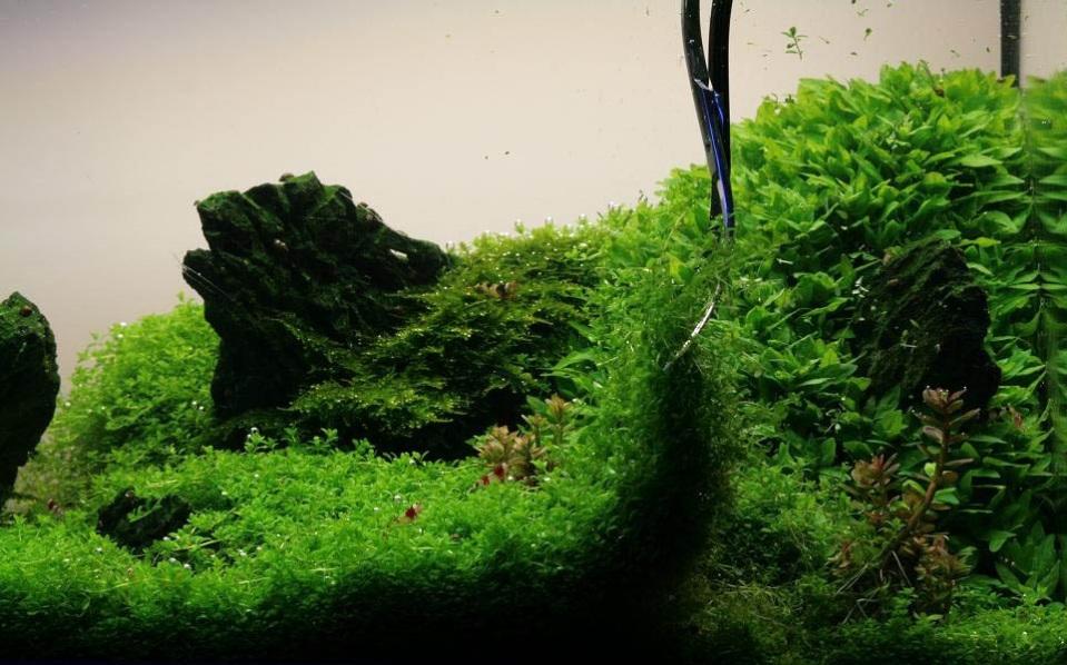 Pruning Freshwater Plants