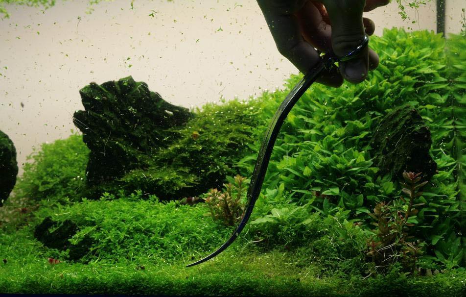 Aquascaping Scissors