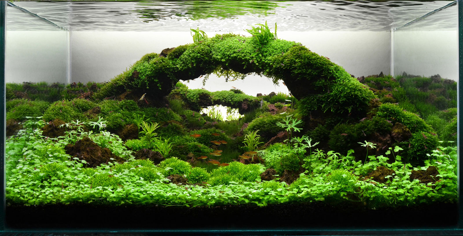 Exceptional Aquascape With Arch