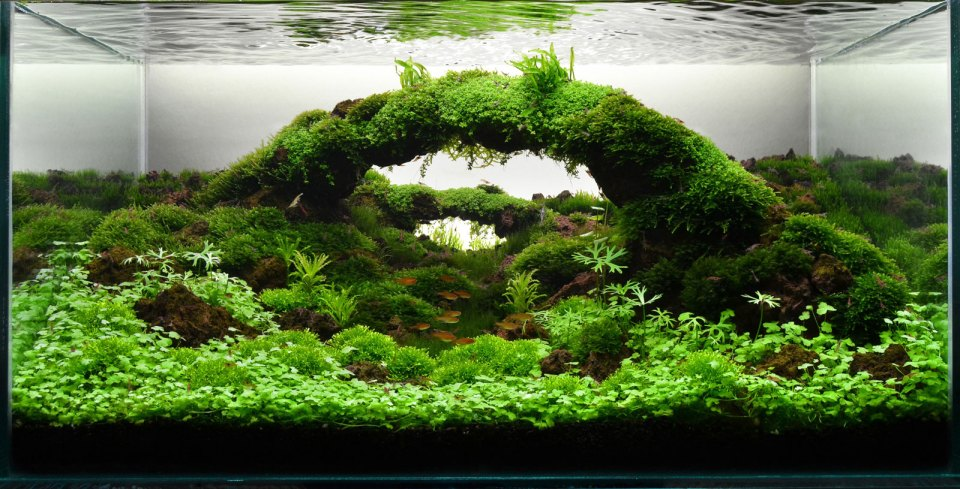 Aquascape with Arch
