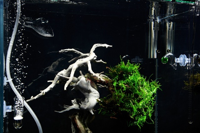 Underwater Bonsai Tree