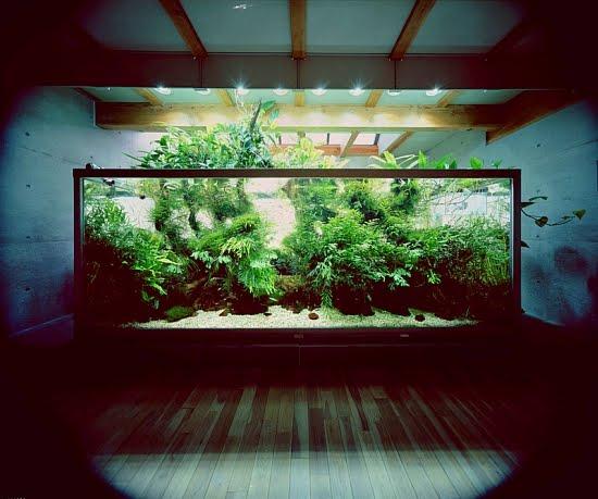 Large Freshwater Aquarium