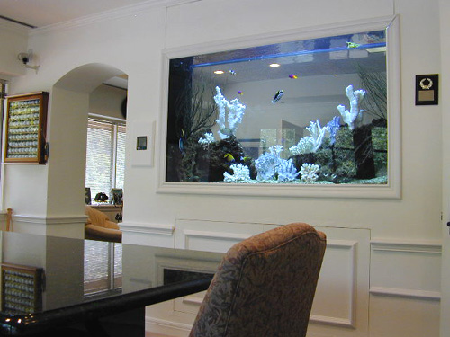 Aquarium Built Into Wall