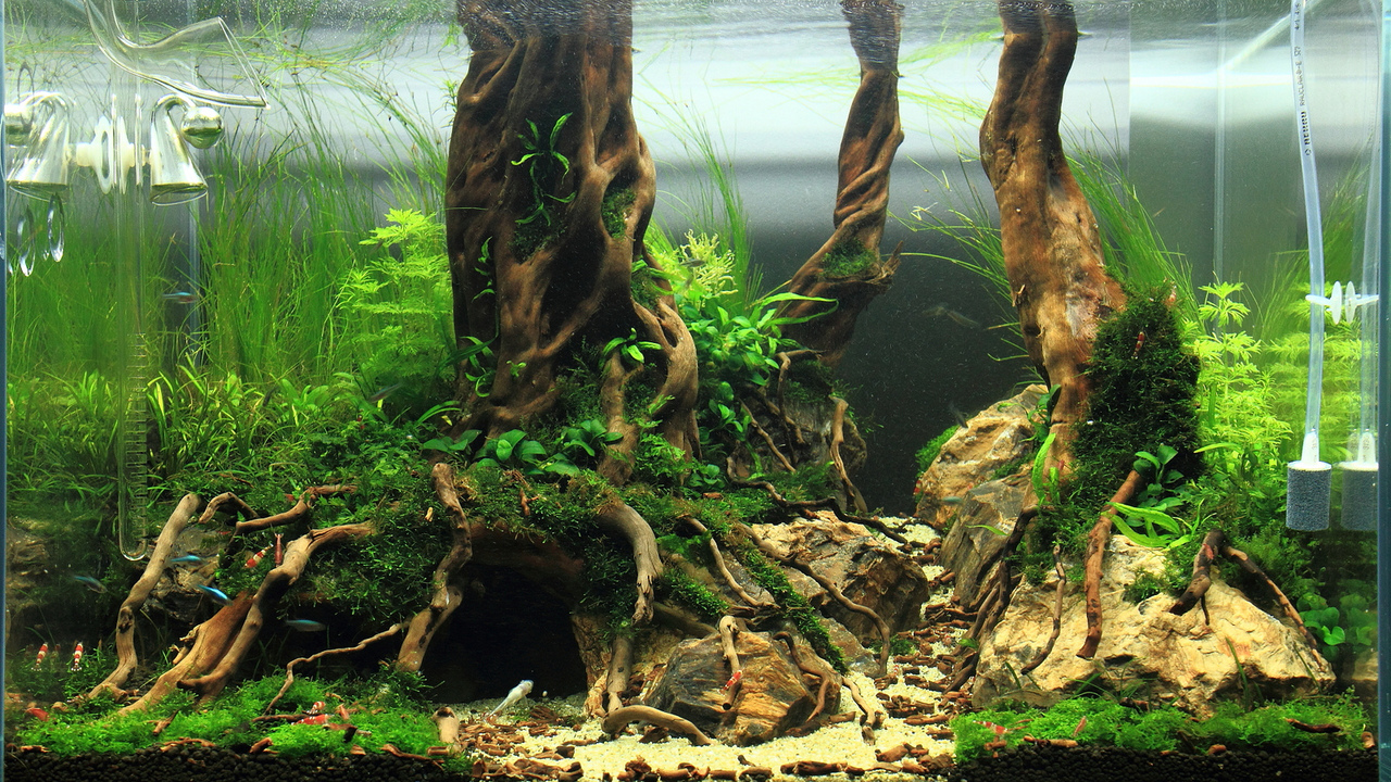 Aquascape With Underwater Tree