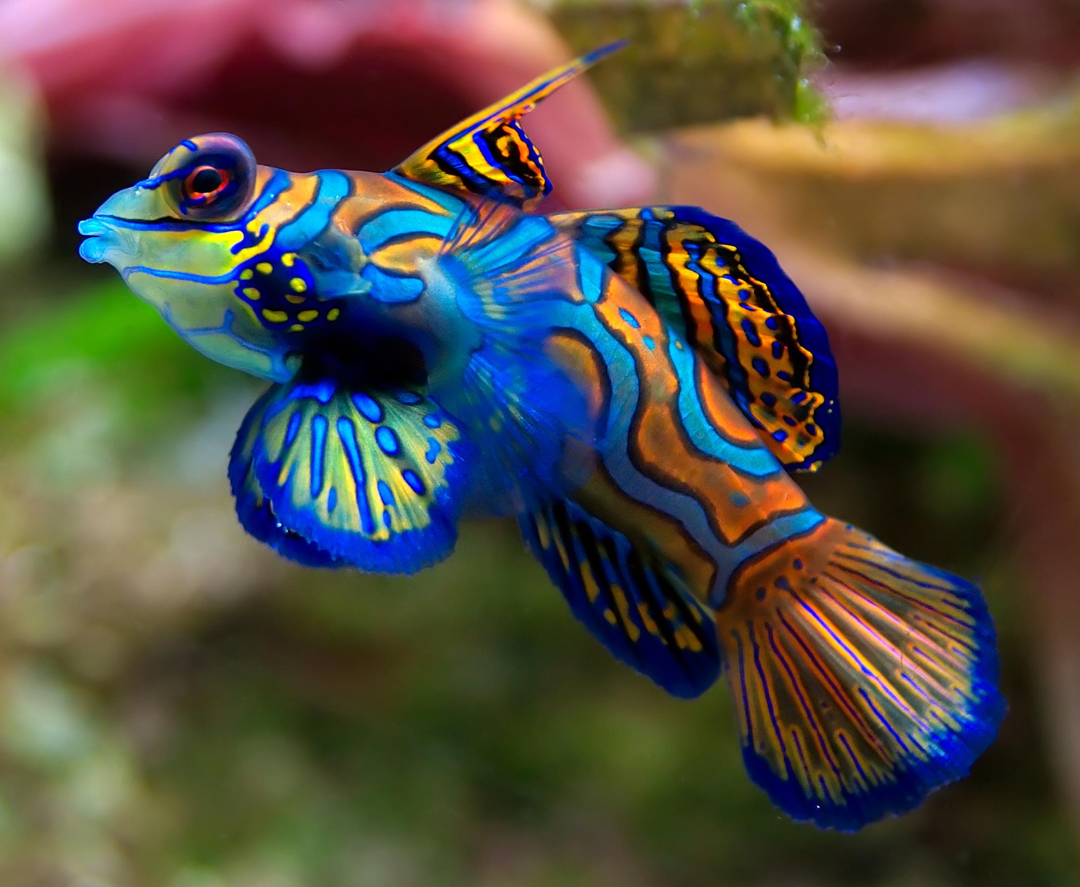 Top 5 Most Colorful Aquarium Fish Fpsbutest