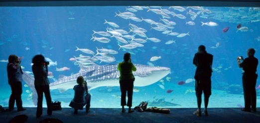 Cameras at an Aquarium