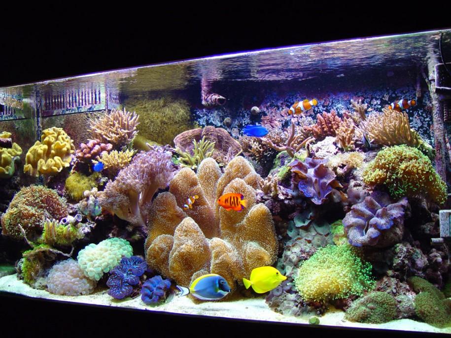 Colorful Reef Aquarium