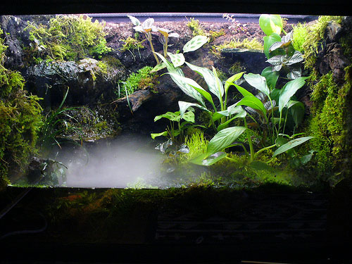 Puddle Aquascape