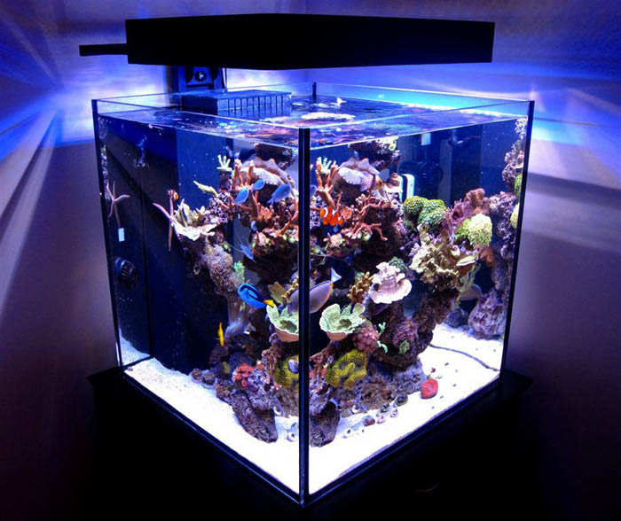Cube Aquascape