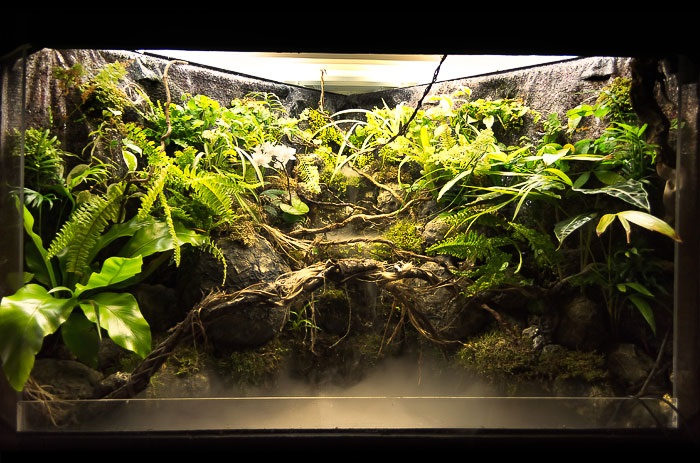 Waterfall Paludarium